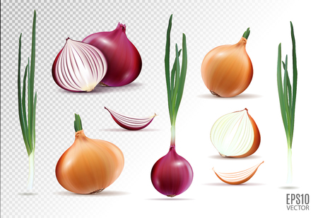 Vector collection of onions with slices isolated on transparent background. Realistic 3d vector onion Vettoriali