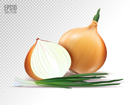 Vector fresh onion with green onion on a transparent background. Realistic vector, 3d illustration