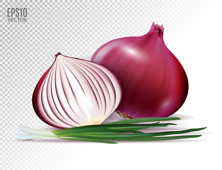 Vector fresh whole and half red onion bulbs with green onions close up isolated on transparent background. Realistic vector, 3d illustration