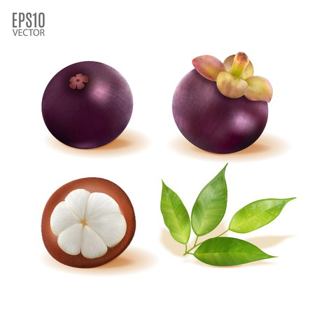 Vector ripe mangosteen with leaves set isolated on white background closeup. Realistic vector, 3d illustration Illustration