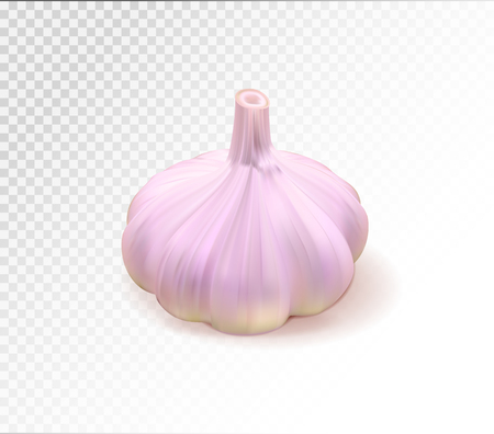 Garlic one whole isolated on transparent background. Quality realistic vector, 3d