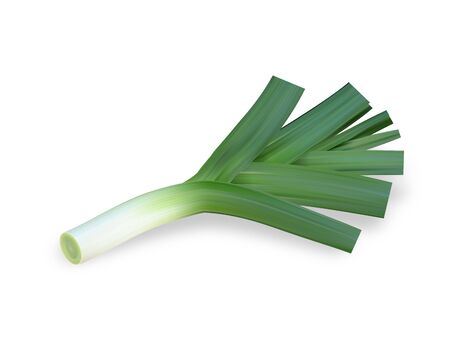 Onion leek. Ripe green vegetable. Natural food. Organic product for salad. Healthy meal. Isolated white background. Eps10 vector illustration.