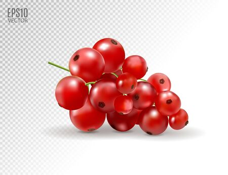 Red currant. Realistic vector illustration of berries on transparent background. 3d Standard-Bild - 129085910