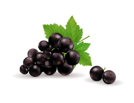Black currant isolated on white background. Vector realistic, 3d illustration Imagens - 129085934