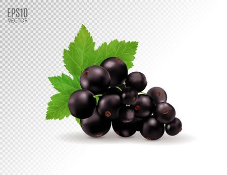 Vector realistic black currant with sheets. Black currant isolated on transparent background. 3d illustration
