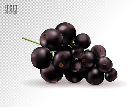Vector realistic black currant with sheets. Black currant isolated on transparent background. 3d illustration Standard-Bild - 129085949