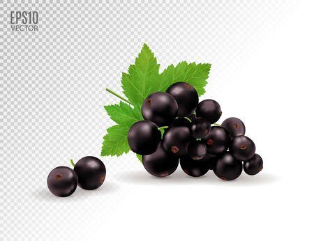 Vektorrealistische schwarze Johannisbeere mit Blättern. Schwarze Johannisbeere auf transparentem Hintergrund isoliert. 3D-Darstellung Vektorgrafik