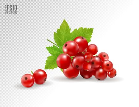 Red currant. Realistic vector illustration of berries on transparent background. 3d Standard-Bild - 129085957