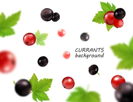 Realistic vector falling red and black currant isolated on transparent background, 3d illustration