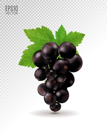 Ripe delicious black currant on transparent background. Vector realistic, 3d illustration Standard-Bild - 129085555