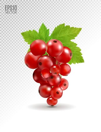 Ripe delicious red currant on transparent background. Vector realistic, 3d illustration Standard-Bild - 129085602