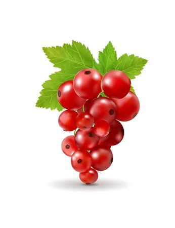 Ripe delicious red currant white background. Vector realistic, 3d illustration Standard-Bild - 129085696