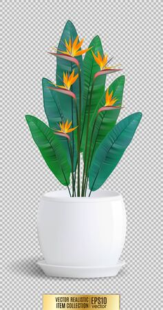 Decorative flower in flower-pot on transparent background. Vector realistic item, 3d illustration