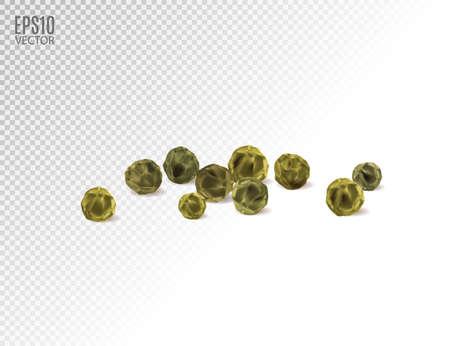 Green peppercorn. Realistic vector illustration, 3d Иллюстрация