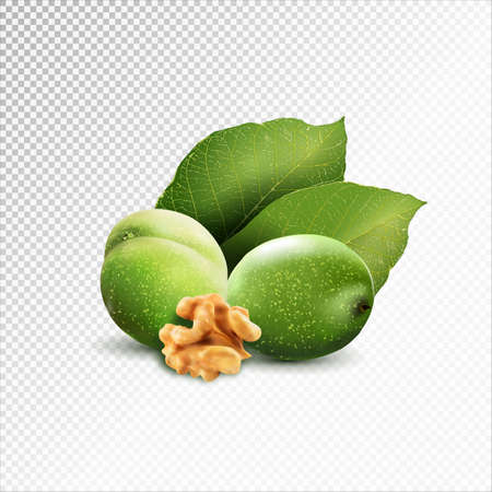 Green walnut; peeled walnut and its kernels. Isolated on a white background. Иллюстрация