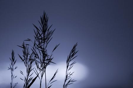 Twig on blue sky