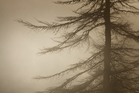 Tree in the night Фото со стока