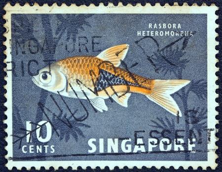 SINGAPORE - CIRCA 1962  A stamp printed in Singapore shows a Harlequin rasbora fish, circa 1962