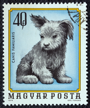 HUNGARY - CIRCA 1974: A stamp printed in Hungary from the Young animals issue shows a dog puppy, circa 1974.