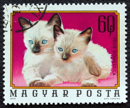 HUNGARY - CIRCA 1974: A stamp printed in Hungary from the 'Young animals' issue shows two Siamese kittens, circa 1974.