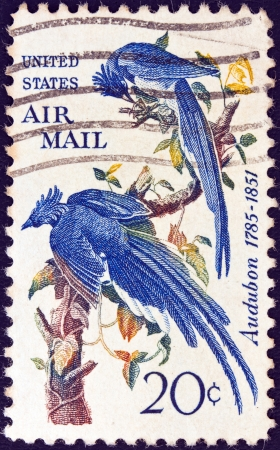 USA - CIRCA 1967: A stamp printed in USA shows Columbia Jays by John James Audubon, circa 1967. Stock Photo - 14136800