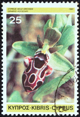 kypros: CYPRUS - CIRCA 1981: A stamp printed in Cyprus from the Cypriot Wild Orchids issue shows Ophrys kotschyi, circa 1981. Editorial