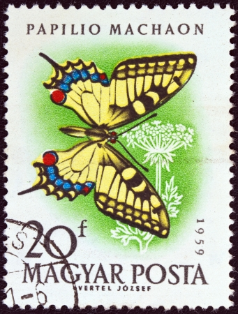 HUNGARY - CIRCA 1959: A stamp printed in Hungary from the Butterflies and Moths issue, shows a Swallowtail butterfly, circa 1959.