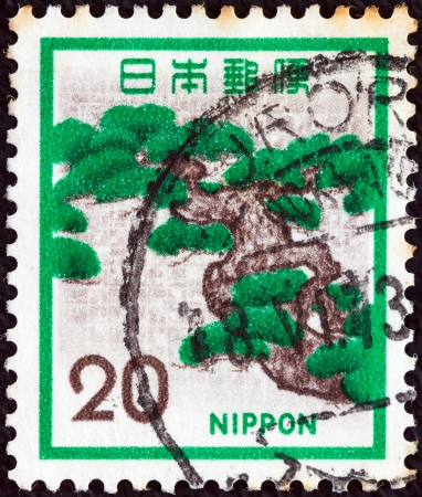 JAPAN - CIRCA 1971: A stamp printed in Japan shows a Pine tree, circa 1971.  Stock Photo - 14515296