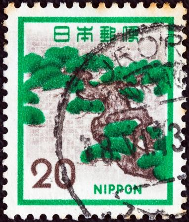 estampilla: JAPAN - CIRCA 1971: A stamp printed in Japan shows a Pine tree, circa 1971.  Editorial