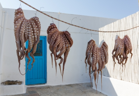 Octopuses drying in the sun in a Greek island Stock Photo
