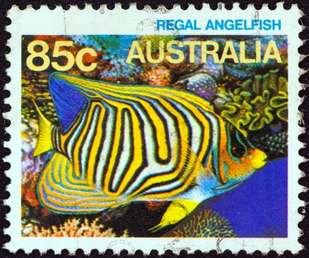 royal angelfish: AUSTRALIA - CIRCA 1984: A stamp printed in Australia from the Marine Life issue shows a Royal angelfish, circa 1984.