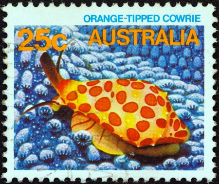 postes: AUSTRALIA - CIRCA 1984: A stamp printed in Australia from the Marine Life issue shows an Orange-lipped cowrie, circa 1984.