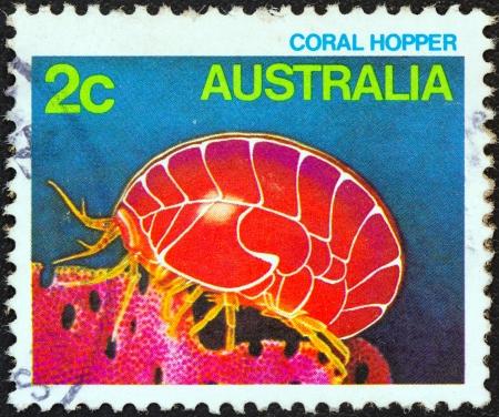 estampilla: AUSTRALIA - CIRCA 1984: A stamp printed in Australia from the Marine Life issue shows a Coral Hopper, circa 1984.