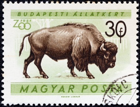 magyar posta: HUNGARY - CIRCA 1961: A stamp printed in Hungary from the Budapest Zoo Animals issue shows an American bison (Bison bison), circa 1961.  Editorial
