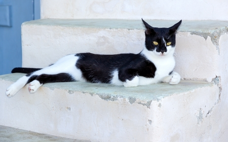 Black and white cat resting on stairs in a Greek island photo