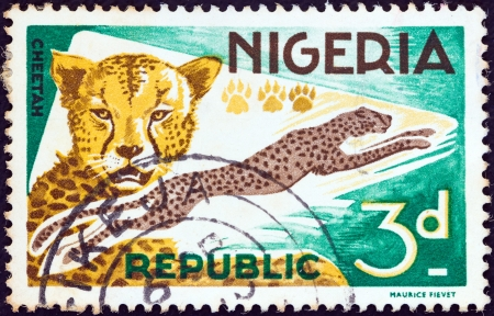 NIGERIA - CIRCA 1965: A stamp printed in Nigeria shows a Cheetah (Acinonyx jubatus), circa 1965.