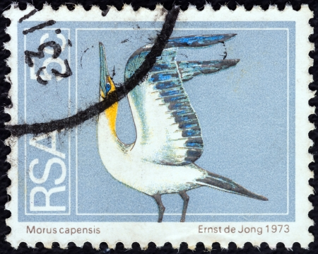 suid: SOUTH AFRICA - CIRCA 1974: A stamp printed in South Africa shows a Cape gannet (Morus capensis) seabird, circa 1974.  Editorial
