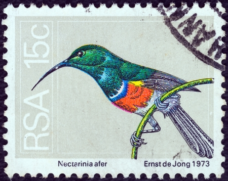 suid: SOUTH AFRICA - CIRCA 1974: A stamp printed in South Africa shows a Greater double-collared sunbird (Nectarinia afer), circa 1974.
