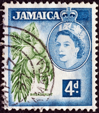 JAMAICA - CIRCA 1956: A stamp printed in Jamaica shows breadfruits (Artocarpus altilis) and Queen Elizabeth II, circa 1956.  Stock Photo - 16869956