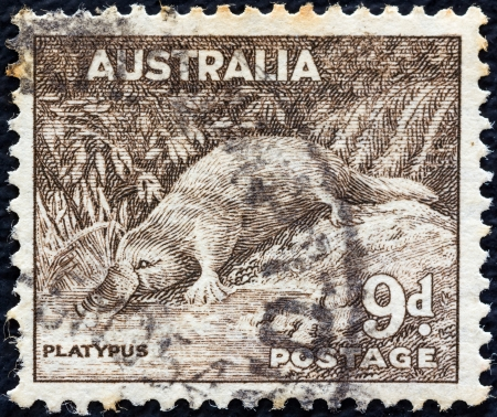 AUSTRALIA - CIRCA 1937: A stamp printed in Australia shows a Platypus (Ornithorhynchus anatinus), circa 1937.  Stock Photo - 16994071