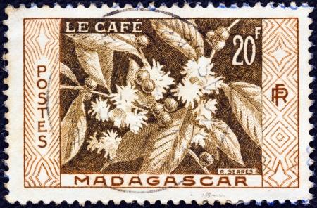 postes: MADAGASCAR - CIRCA 1956: A stamp printed in Madagascar shows Coffee, circa 1956.