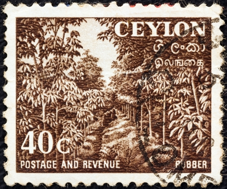 caoutchouc: CEYLON - CIRCA 1951: A stamp printed in Ceylon shows a rubber plantation, circa 1951.  Editorial