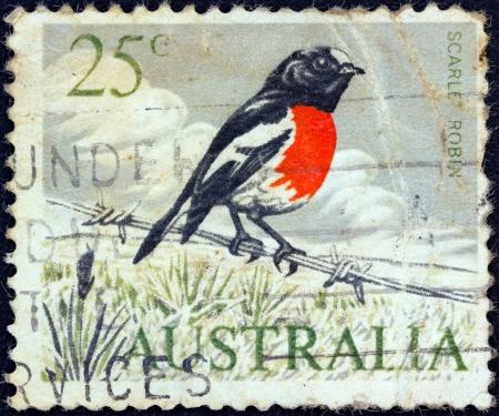 AUSTRALIA - CIRCA 1966: A stamp printed in Australia shows a Scarlet robin (Petroica boodang) bird, circa 1966.  Stock Photo - 17063040