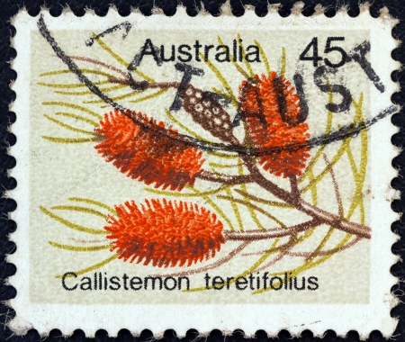 AUSTRALIA - CIRCA 1975: A stamp printed in Australia from the Wild Flowers issue shows Needle Bottlebush (Callistemon teretifolius), circa 1975.
