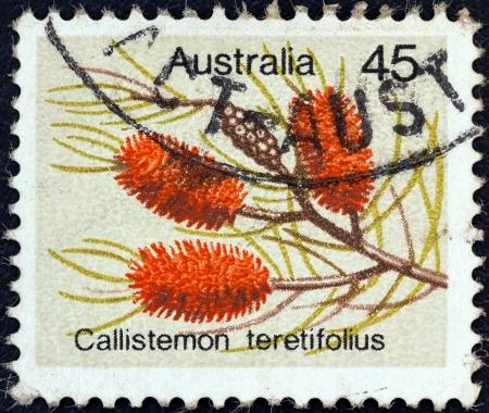 postes: AUSTRALIA - CIRCA 1975: A stamp printed in Australia from the Wild Flowers issue shows Needle Bottlebush (Callistemon teretifolius), circa 1975.