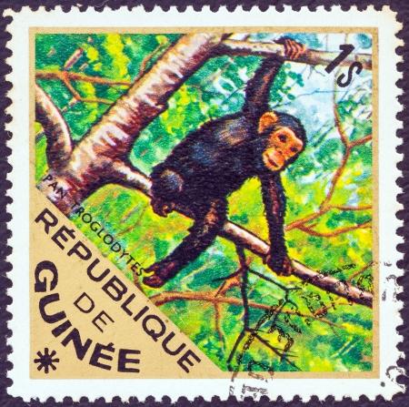 estampilla: GUINEA - CIRCA 1975: A stamp printed in Guinea from the Wild Animals issue shows a Chimpanzee (Pan troglodytes), circa 1975.