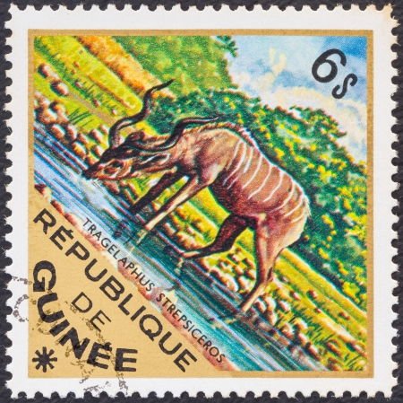GUINEA - CIRCA 1975: A stamp printed in Guinea from the Wild Animals issue shows a Greater Kudu (Tragelaphus strepsiceros), circa 1975.