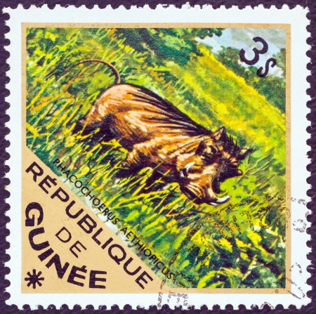 GUINEA - CIRCA 1975: A stamp printed in Guinea from the 'Wild Animals' issue shows a Desert Warthog (Phacochoerus aethiopicus), circa 1975.