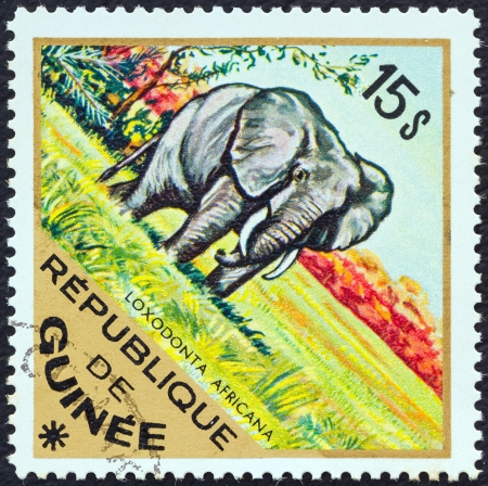 GUINEA - CIRCA 1975: A stamp printed in Guinea from the Wild Animals issue shows an African Elephant (Loxodonta Africana), circa 1975.