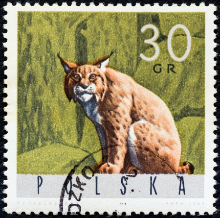 circa: POLAND - CIRCA 1965: A stamp printed in Poland from the Forest Animals issue shows a lynx, circa 1965.
